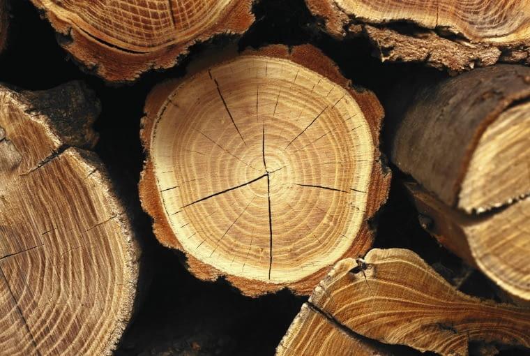 Pinus sylvestris, sosna pospolita