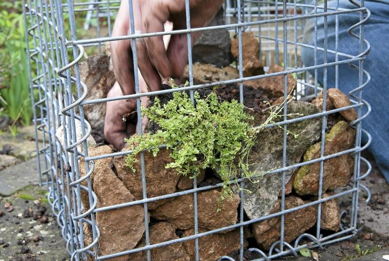 Gabione befŁllen und bepflanzen SLOWA KLUCZOWE: Bepflanzung Beratung Farbe Flechtkorb Fotografie Gabione Horizontal Korb Pflanze anpflanzen auffŁllen bepflanzen einpflanzen auffŁllen Querformat