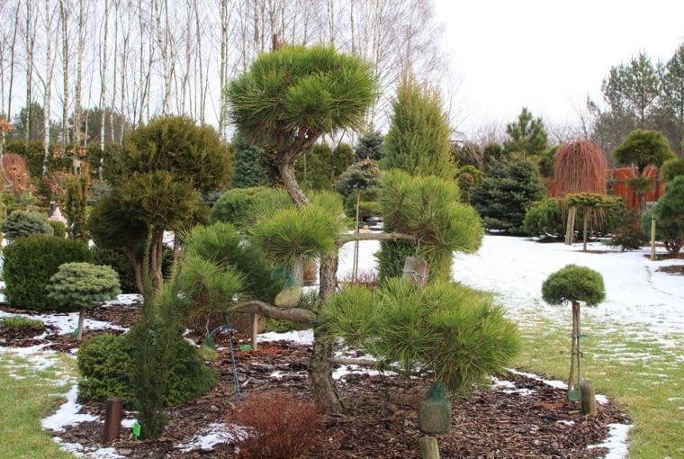 Ogród uczestników 'Z ogrodem na TY'