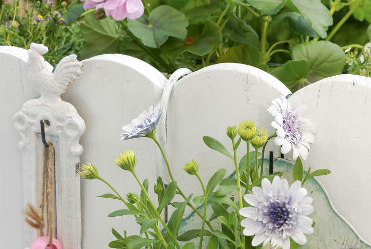 Biel podkreśla barwy kwiatów - tu osteospermum.