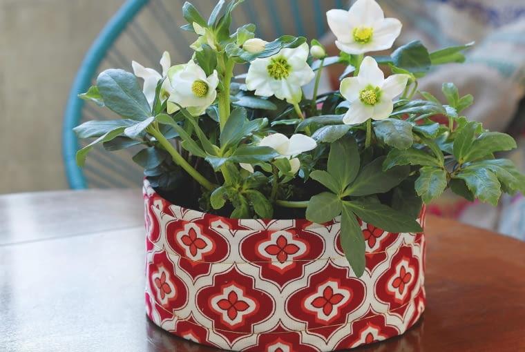 Dla ciemiernika zima to naturalny okres kwitnienia w ogrodzie. Jeśli rośnie w doniczce, także wystarczy mu kilka stopni powyżej zera.