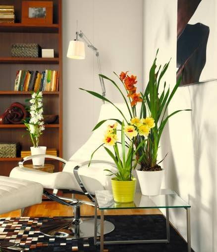 storczyki, orchidee. 10.12.2009 WARSZAWA SESJA KWIATY WE WNETRZU