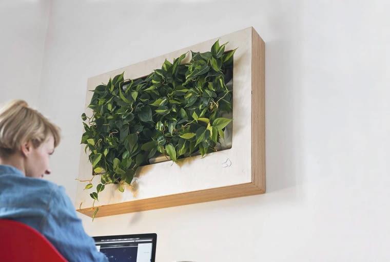 ŻYWY OBRAZEK EPIPREMNUM (Epipremnum) w modnej wertykalnej kompozycji. Podczas pracy miło zerkać na taki obrazek - wszak zieleń uspokaja.