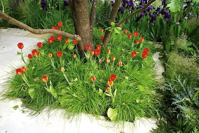26.05.2010 LONDYN MIEDZYNARODOWA WYSTAWA OGRODOW CHELSEA FLOWER SHOW