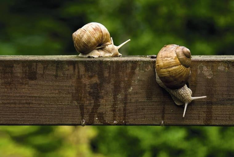 Winniczki (ale także np. ślimaki gajowe) potrafią wspinać się po drewnie i murze