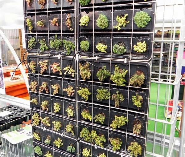 Targi Gardenia 2012. Zielona ściana - ogród wertykalny