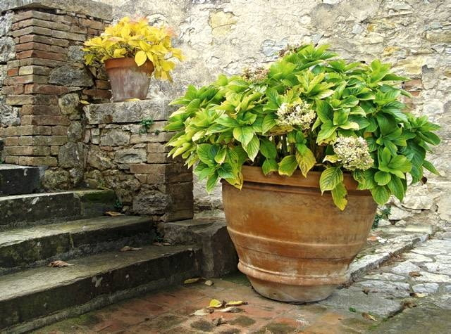 Postarzany ogród. Spójna, ciepła kolorystyka kamiennych ścian i stylizowanych donic z terakoty przywodzą na myśl wygrzane słońcem antyczne patio