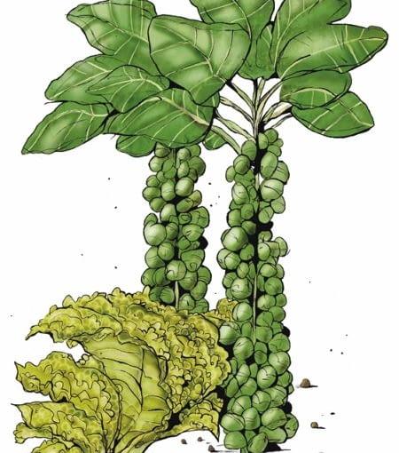 Kapusta brukselska, roszponka, endywiai jarmuż znoszą bez uszczerbku spadki temperatury do -5°C. Te warzywa można niekiedy zbierać aż do grudnia