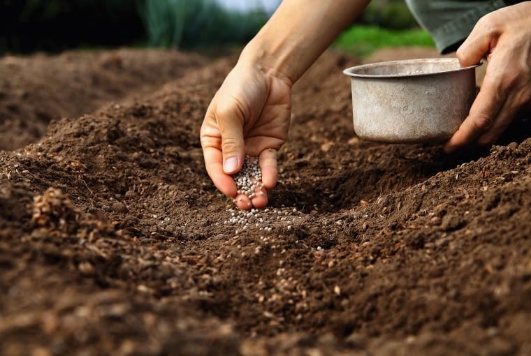 Czas wysiewania warzyw do gruntu.