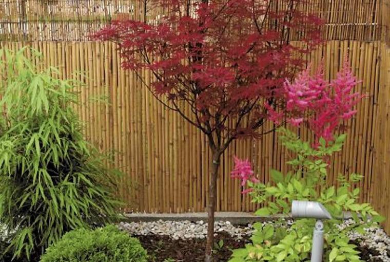 Aranżacje ogrodów. Mały ogród w stylu orientalnym. Wiele gatunków pochodzących z Dalekiego Wschodu dobrze się czuje w naszym klimacie. Na zdjęciu klon palmowy i tawułka