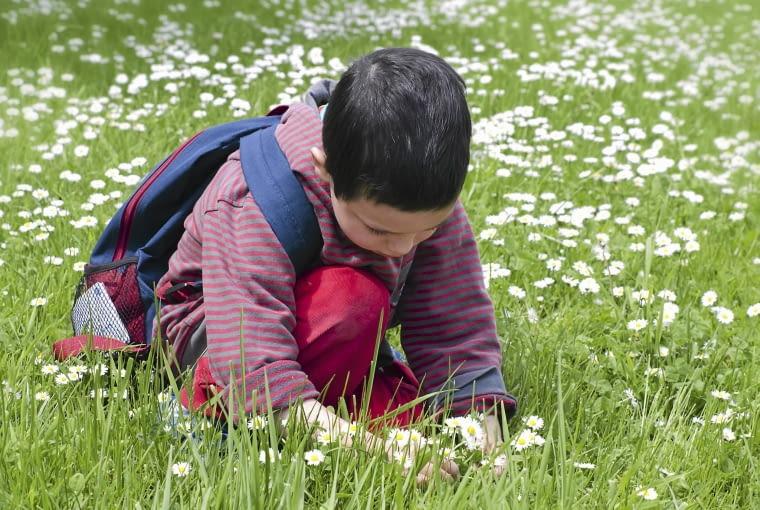 Stokrotki upiększą każdy trawnik. Można z nich pleść wianki i robić małe bukiety