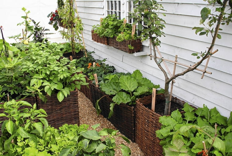 Ogródek warzywny (m.in. z rabarbarem, ziemniakami, papryką) zaaranżowany w wiklinowych koszach wyścielonych folią