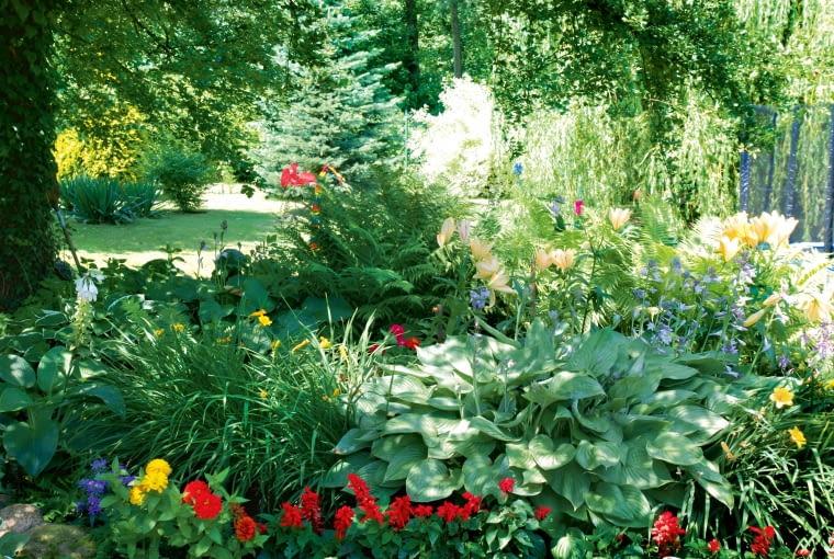 Liliowce, funkie i lilie tworzą centrum pólcienistej rabaty, a koloru dodają rośliny sezonowe: szałwie i cynie.