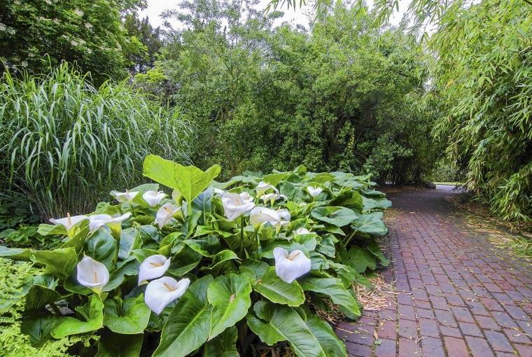 SLOWA KLUCZOWE: anglia banboo kantedeskia kew ogród park