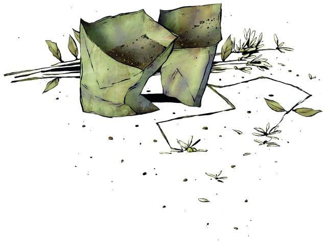 Nasiona kwiatów zbieramy przy słonecznej pogodzie. Wkładamy je do papierowych torebek i przechowujemy w suchym miejscu