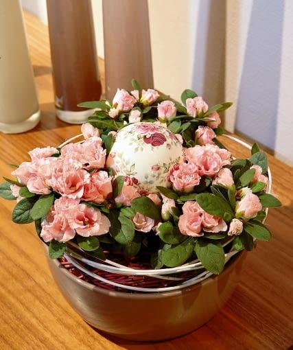 Kwiaty odmiany 'Luntera' mają łososiowy odcień i układ płatków podobny do róży.