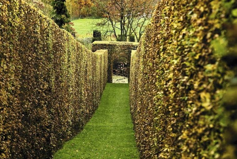 Grass Garden Pathway Through Hornbeam Hedges (Carpinus), Belgium