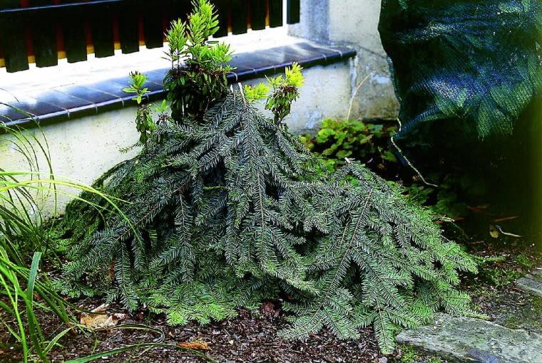 Stroisz ma sporo zalet - dobrze chroni delikatne rośliny, przepuszcza powietrze, nie gnieżdżą się pod nim gryzonie