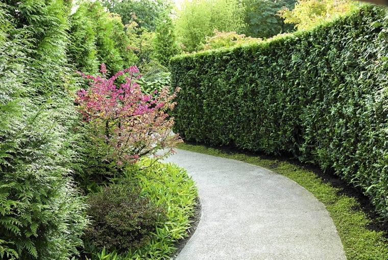 SLOWA KLUCZOWE: HORIZONTAL conifer hedge iglaste thuja tuja wieczniezielone zawszezielone zimozielone zywoplot zywotnik żywopłot żywotnik