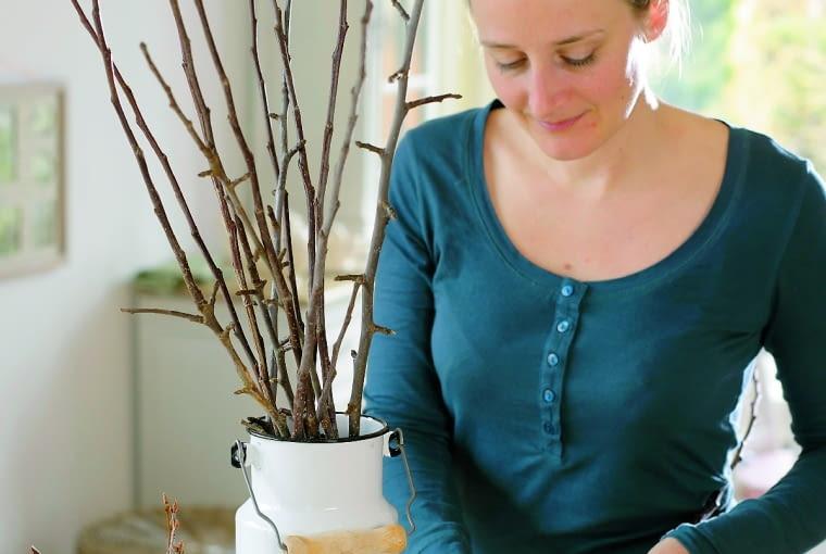 cBarbarazweige in alter Milchkanne 1/3Frau schneidet Zweige von Prunus ( Zierkirschen ) schrg an