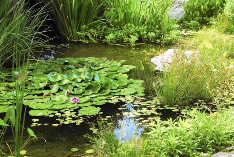 Odprowadzana z bioczyszczalni woda przestaje być ściekiem, nadaje się nawet do zasilania oczka wodnego.