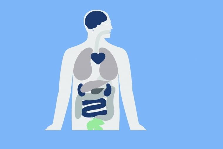 Wpływ zanieczyszczeń na zdrowie: Ból głowy i niepokój (SO2). Wpływ na funkcjonowanie ośrodkowego układu nerwowego (PM); Podrażnienie oczu, nosa i gardła; Problemy z oddychaniem (O3, PM, NO2, SO2, B(a)P); Choroby układu krążenia (PM, O3, SO2); Wpływ na układ oddechowy: podrażnienie, zapalenie i infekcje, astma i obniżona wydajność płuc, przewlekła obturacyjna choroba płuc (PM), rak płuc (PM, B(a)P); Wpływ na wątrobę, śledzionę i krew (NO2); Wpływ na układ rozrodczy (PM)