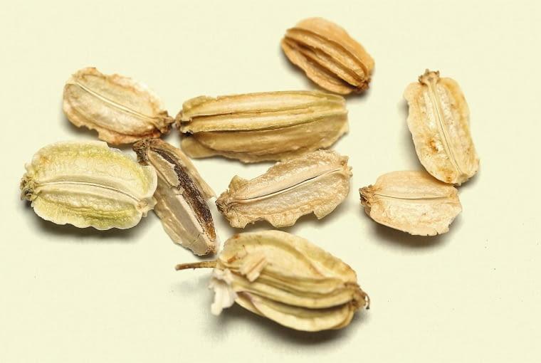 Ukryte w drobnych owockach nasiona szybko tracą żywotność. Należy je siać tuż po zbiorze.