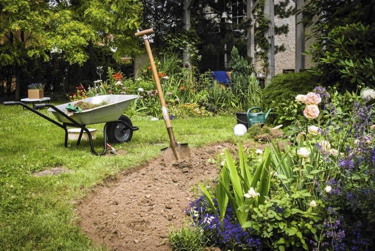 Lato to pora na dzielenie i przesadzanie irysów. Dobrze też przyjmują się rośliny kupowane w doniczkach, nawet gdy kwitną. Trzeba jednak na nowym miejscu często je podlewać. Do zimy mocno się ukorzenią i lepiej zniosą mrozy niż te posadzone jesienią.