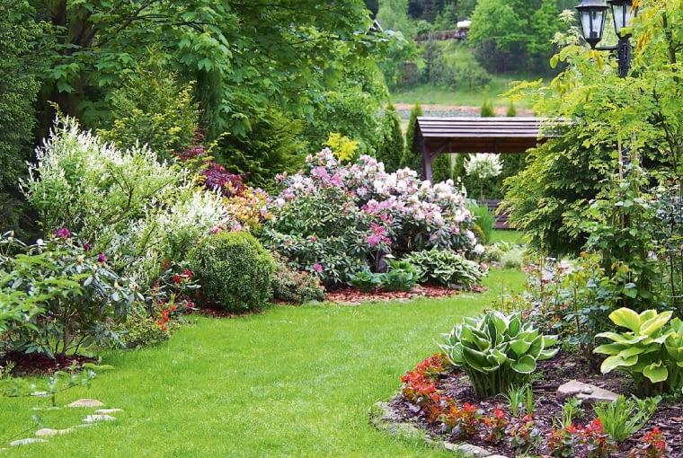 Różaneczniki ifunkie tworzą wspaniałe obramowanie dla żywej zieleni trawnika.