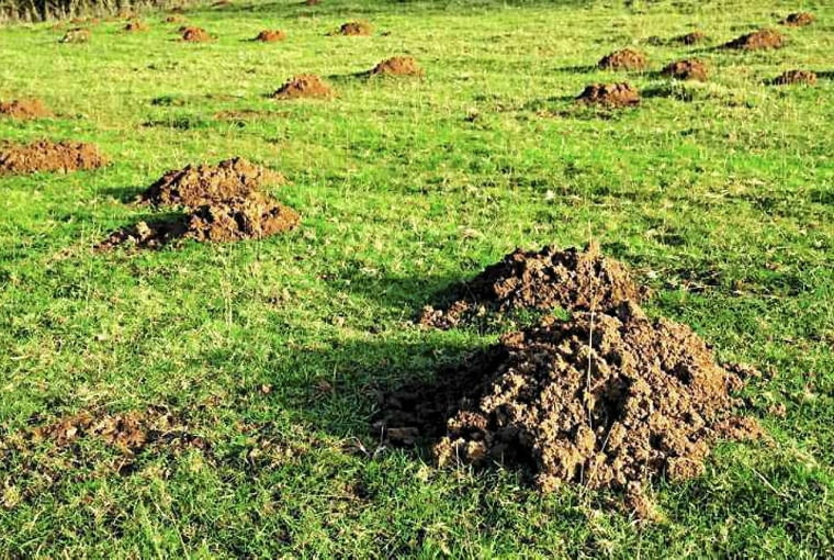 Przed zima usuwamy kretowiska