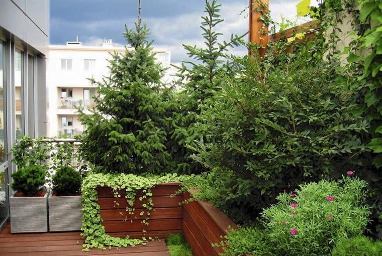 TARAS PO ZMIANACH - jest kameralny dzięki wysokim roślinom, m.in. świerkom serbskim posadzonym w drewnianych skrzyniach