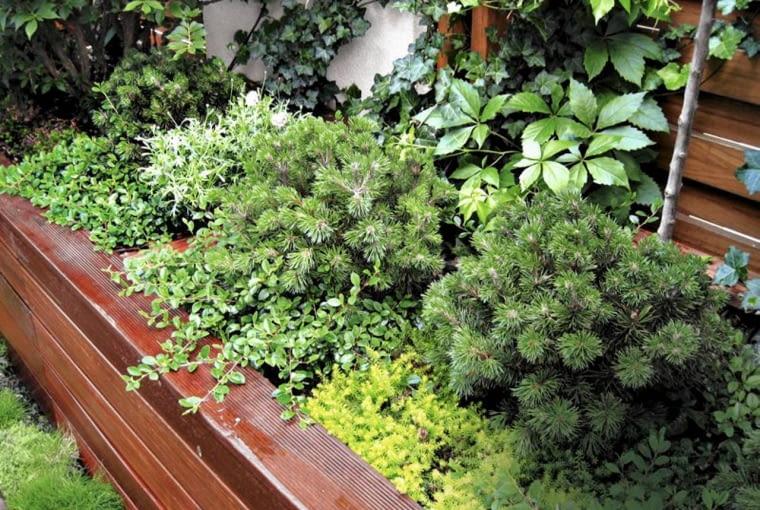 NA TARASIE POSADZONO rośliny niesprawiające kłopotów w uprawie, m.in. kosodrzewinę, trzmielinę i irgę.