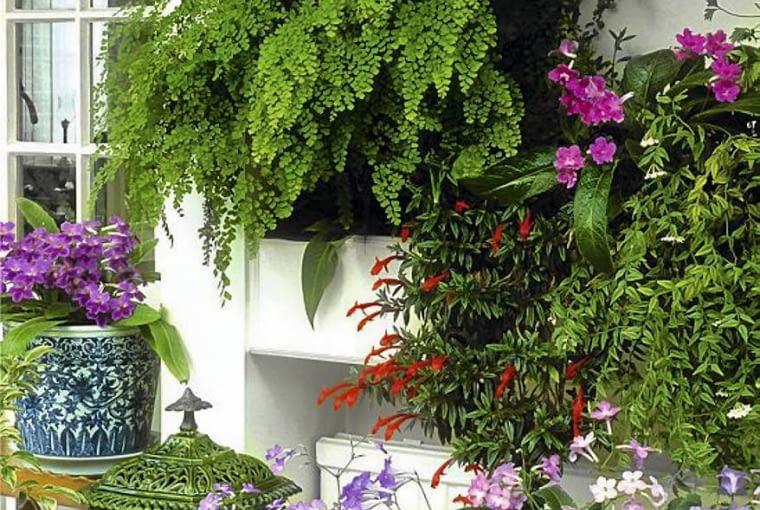 Rośliny na zabudowany balkon.Gdy na balkonie jest ciepło i wilgotno, mogą tu rosnąć tak delikatne gatunki, jak skrętnik, paproć adiantum i kolumnea