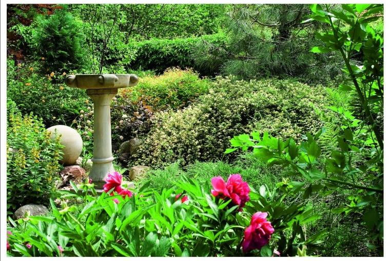 W zakątku ukrytym za parawanem zieleni kwitną peonie, tojeść kropkowana, złotlin japoński, pęcherznice i tawuły.