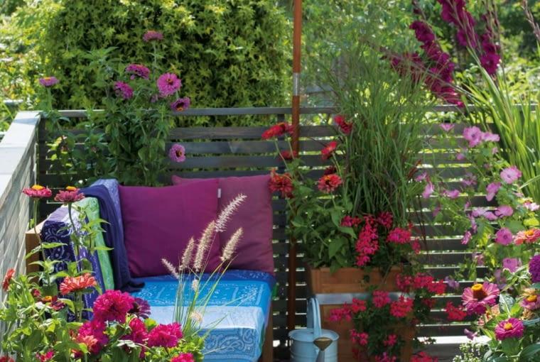 Gemuetliche Lounge-Ecke unterm Sonnenschirm, Pelargonium (Geranien), Zinnia (Zinnien), Grser, Gladiolus (Gladiolen) und Lavatera trimestris (Bechermalve) Giesskanne 61063086,