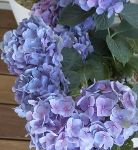 Mały balkon - rośliny balkonowe, kwiaty hortensji