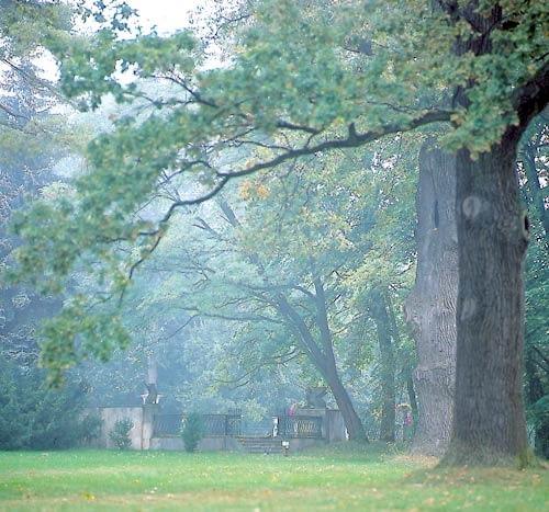 Park Natolin w Warszawie. Górny park przy tarasie pałacowym