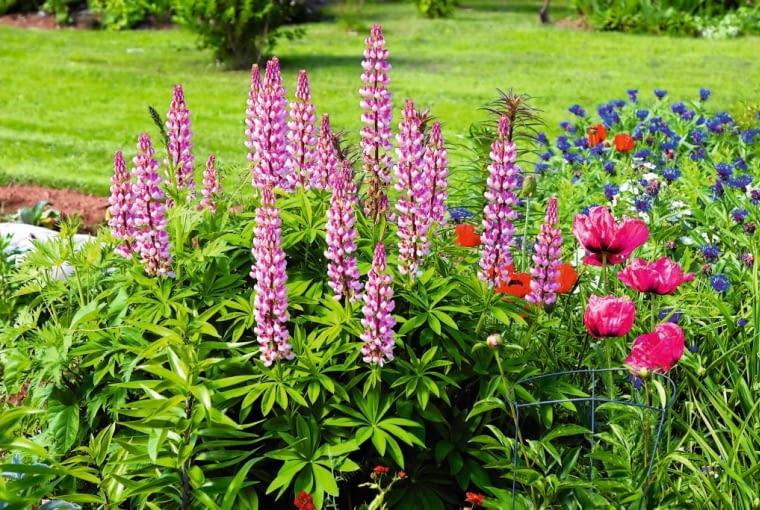 Zadbana rabata bylinowa to wizytówka każdego ogrodu.