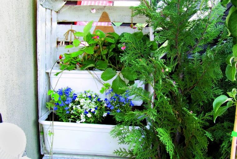 Regał ze skrzyń na owoce mieści aż pięć pojemników do uprawy kwiatów i truskawek.