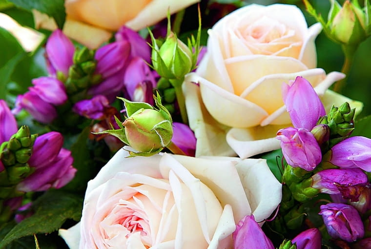 'Madame Anisette' - mieszaniec herbatni,wys. 0,8 m, kwiaty o średnicy 8 cm.