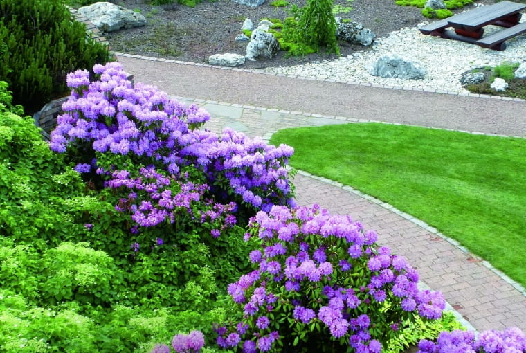 W kwitnące różaneczniki to wspaniały spektakl - dlatego do Ogrodów Kapias koniecznie trzeba się wybrać w maju.