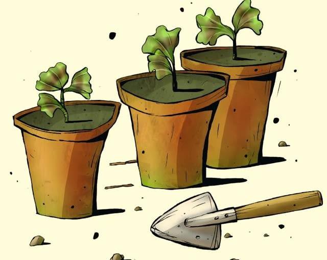 Pora na pierwsze sadzonki Kto ma dorodne pelargonie, fuksje lub inne kwiaty balkonowe, właśnie teraz może zacząć ścinać z nich sadzonki. Najlepiej nadają się do tego celu końcówki pędów o długości 6-8 cm. Umieszczamy je w mieszance torfu z piaskiem lub nawet tylko w naczyniu z wodą i ustawiamy w dobrze oświetlonym miejscu. Po 2-3 tygodniach wypuszczą korzenie i będzie można posadzić je pojedynczo do niewielkich doniczek z ziemią uniwersalną. Starannie pielęgnowane (podlewane, nawożone i przynajmniej raz przycinane w celu rozkrzewienia) zdążą się dobrze rozrosnąć do maja, gdy przyjdzie czas posadzenia ich na zewnątrz.