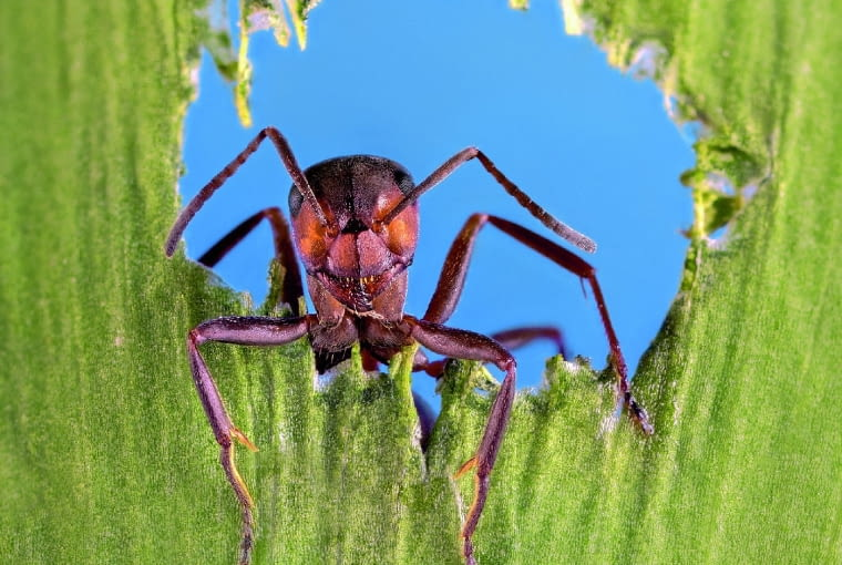 Mrówki W Ogrodzie E Ogrody