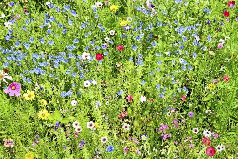 Zestaw z przewagą różnych odmian lnu wielkokwiatowego - o kwiatach niebieskich, czerwonych i biało-różowych.