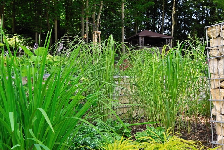 Tam, gdzie nieco więcej słońca, na dolnym tarasie, zamieszkały trawy m.in. Miskanty i Złocista Hakonechloa rodem z Japonii.