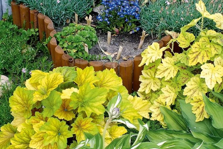 Na działce rosną nie tylko rośliny, które zachwycają kwiatami, ale również te o ozdobnych liściach, jak funkie i żurawki. Obecnie mamy kilkanaście odmian tych pięknych, a mało wymagających roślin.