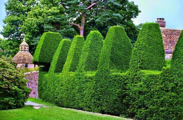 Do nadania roślinie takiego wyszukanego kształtu trzeba nie lada wprawy i zręczności. Rzeźby z krzewów i kwiatów