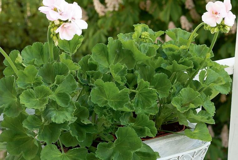 Skrzynka wstylowej osłonce co roku zapełnia się innymi kwiatami.