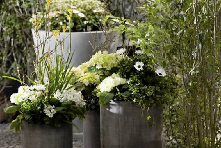 hortensje ogrodowe, dalie, osteospermum, kalanchoe w pojemniku