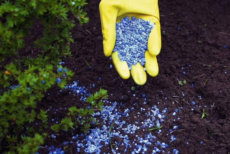 Wiosennego zasilania wymagają nie tylko świeżo posadzone rośliny, ale także te, które zimowały w gruncie.